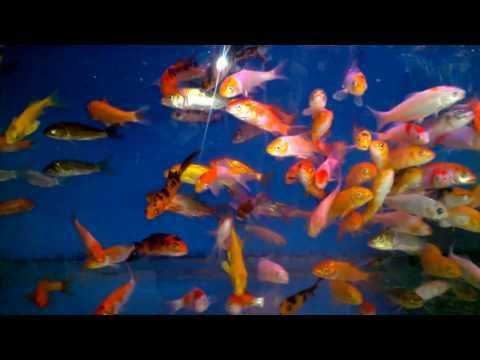 fish-tank-howto-make-design-aquarium-FHD-1080P-NEW-Freshwater-Setup-Disease-Breed-wallpaper-wp360129