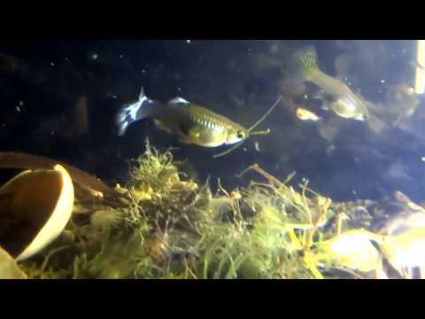 fish-tank-howto-make-design-aquarium-FHD-1080P-NEW-Freshwater-Setup-Disease-Breed-wallpaper-wp36033
