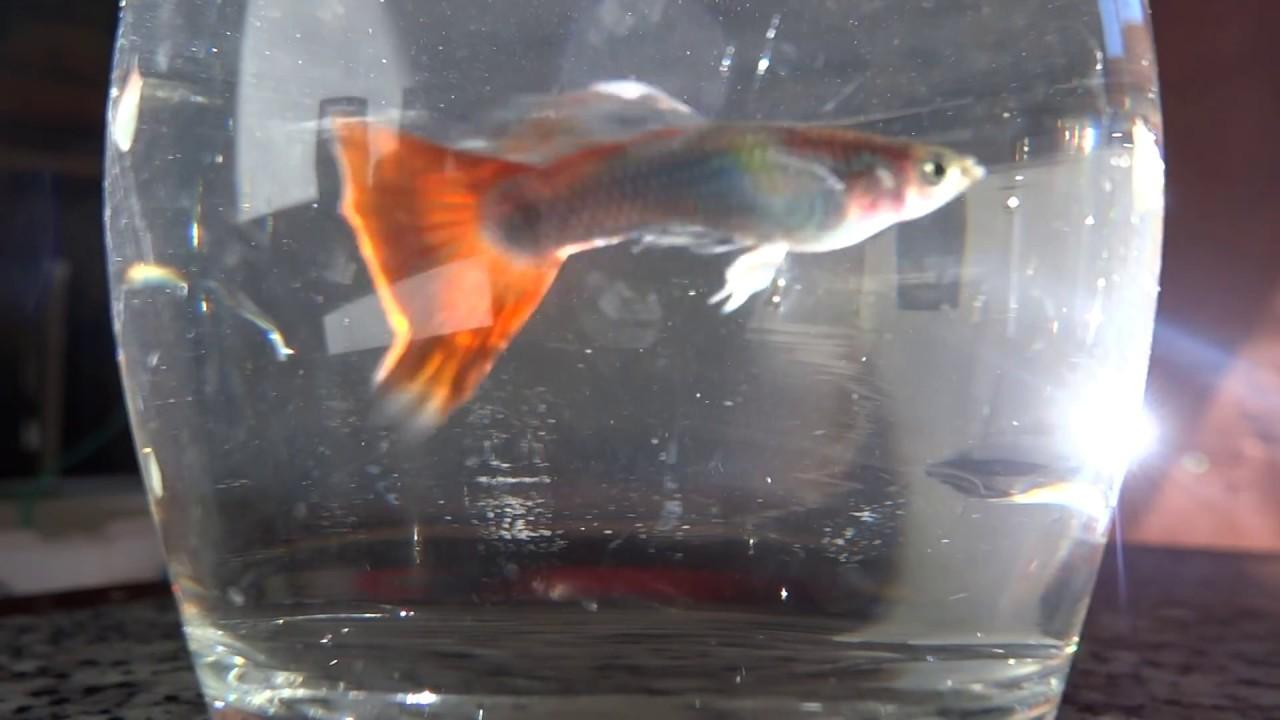 fish-tank-howto-make-design-aquarium-FHD-1080P-NEW-Freshwater-Setup-Disease-Breed-wallpaper-wpc580297