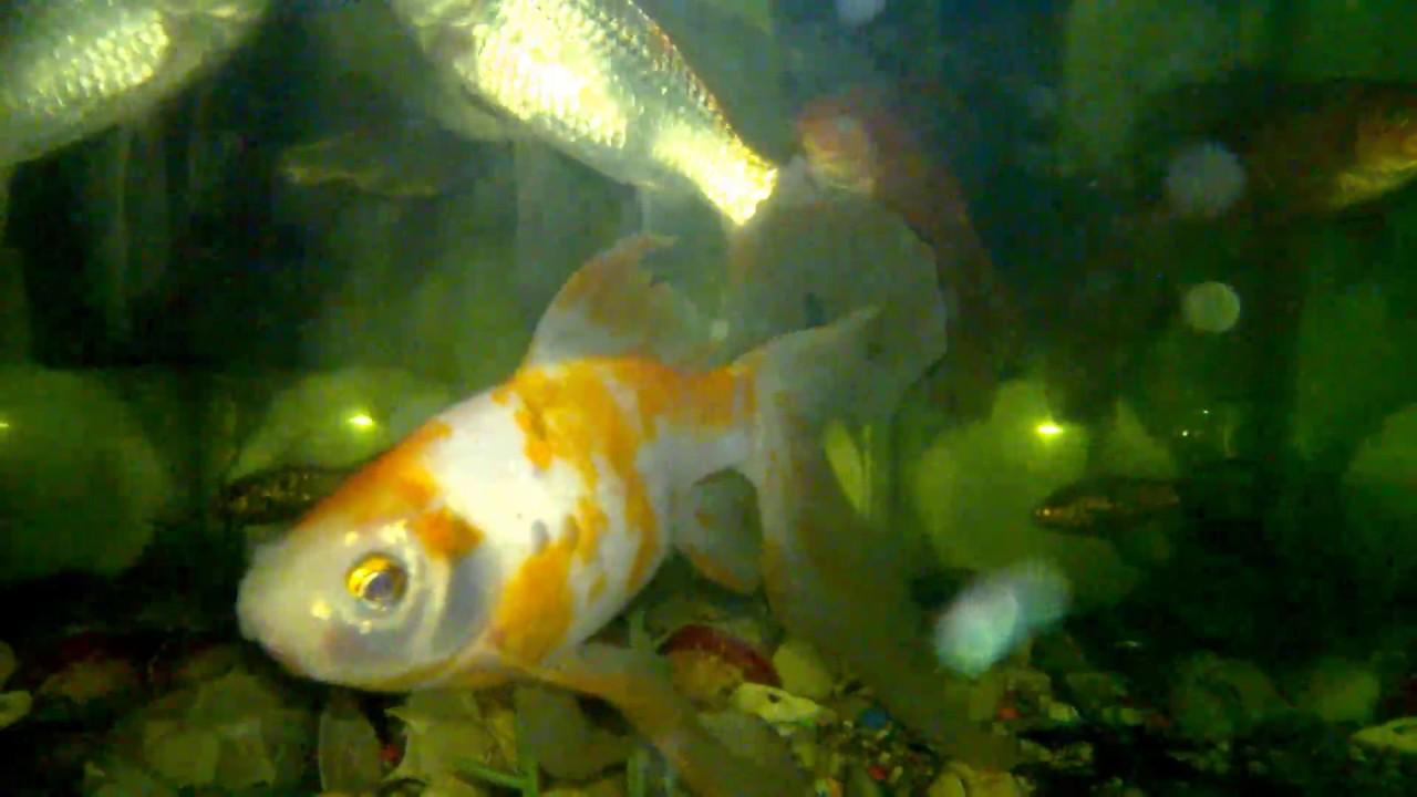fish-tank-howto-make-design-aquarium-FHD-1080P-NEW-Freshwater-Setup-Disease-Breed-wallpaper-wpc580371