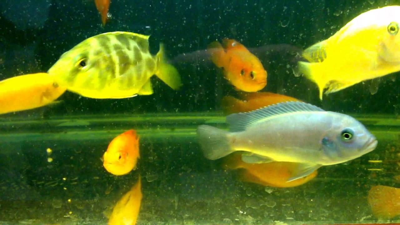 fish-tank-howto-make-design-aquarium-FHD-1080P-NEW-Freshwater-Setup-Disease-Breed-wallpaper-wpc580409