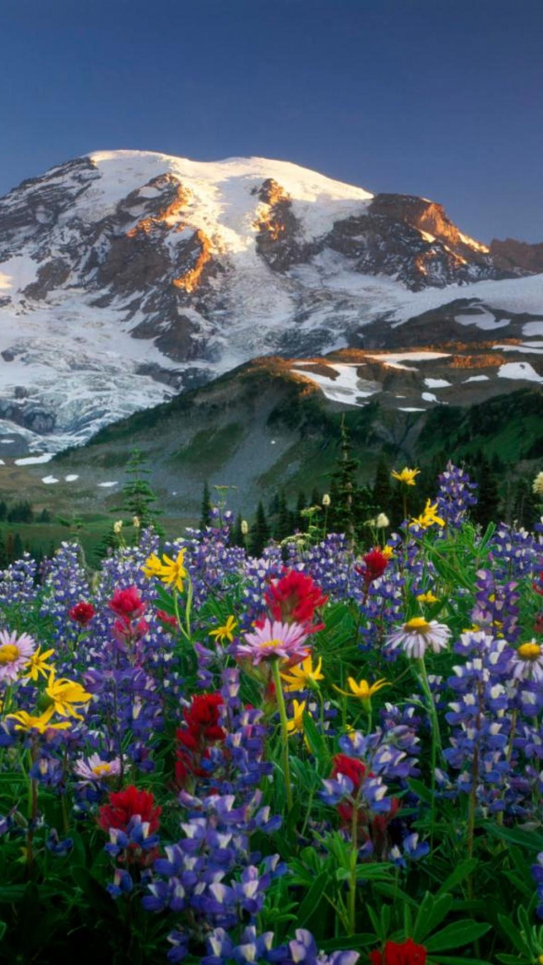 Top Wallpaper Mountain Flower - lupines-flowers-fields-mountains-trees-nature-snow-wallpaper-wpc9007355  HD_51671.jpg